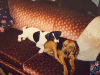 The is Susie and Kelly as puppies. We had them for almost 20 yrs so the kids grew up with them.