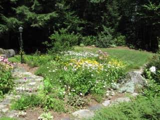 Flower garden summer