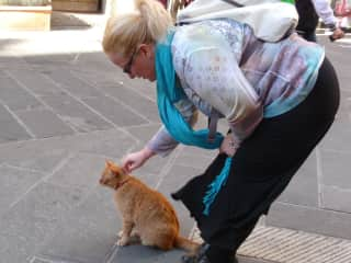 Cat loving in Sicily
