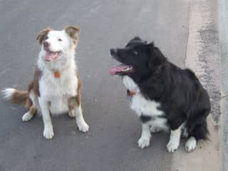 Our dogs Coco n Koda
