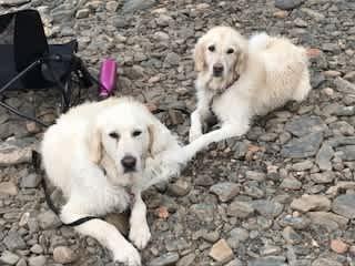 Piper and Zuria after a swim