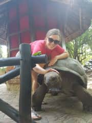 The biggest and oldest turtle that we saw