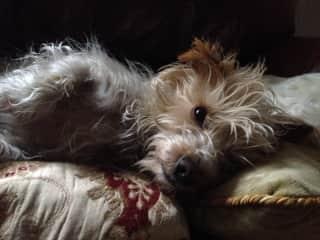 Millie looking cute