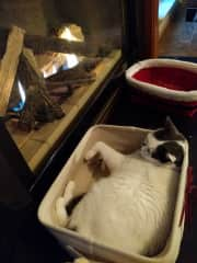 """""""Peanut"""" enjoying a cozy fire on a cold night. Doesn't that look comfortable?"""