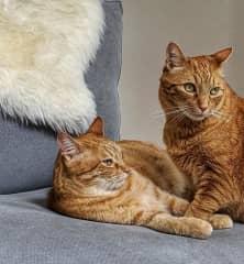 Brother Kitties