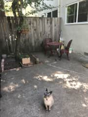 Very quiet and peaceful enclosed patio, with entrance only from the bedroom. Rumi loves to hang out here with your supervision!