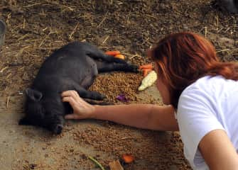 Jane with pot belly pig Watson.