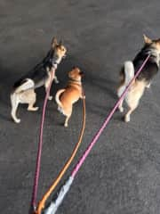 Walking 3 New Friends in San Antonio