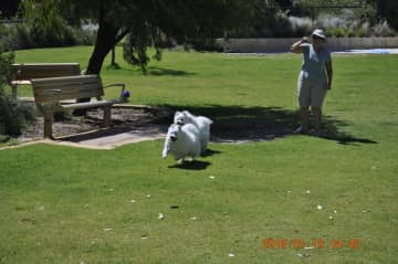 Pam Playing With House Sit Dogs In Australia