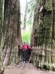 Hoh River Trail, Olympic National Park