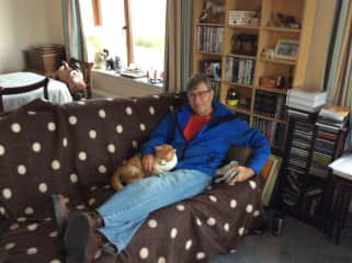 Pat cat sitting