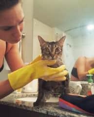 Bellatrix getting a flea treatment