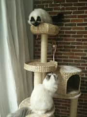 One of the Cats places