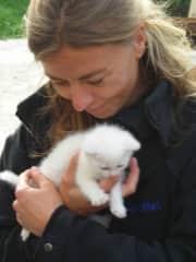 Everybody loves a kitten