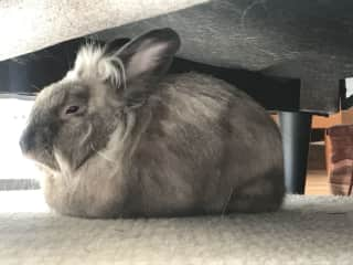 Naptime under the couch