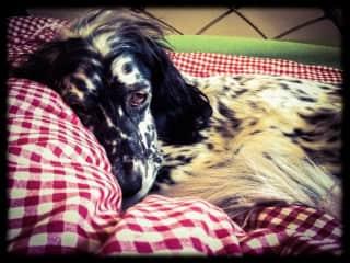 Schatze loves naps!