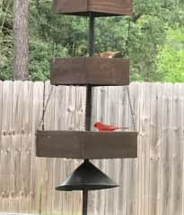 Happy little cardinals - a male and a female. We have doves, blue jays, three types of woodpeckers and many more...