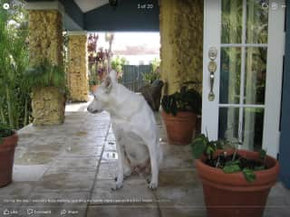 Jeffrey has free reign in and out of the gated house in Miami - Door open