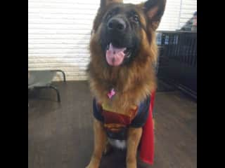 Romeo's first Halloween.  He is a good looking Superman!