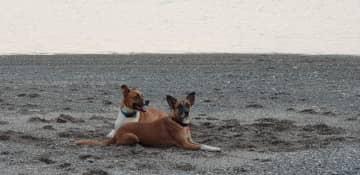 Milo with his best friend, Vivi