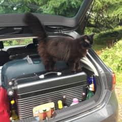 Merlin's stowaway attempt