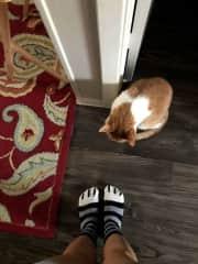Oscar admiring my kitty paw socks
