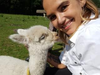 Debbie just love alpacas!