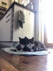 Miles and George, our rescue kitten brothers <3.