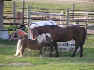 My horses Jammer and Moke