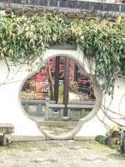 Another shot of the garden in a Chinese Garden