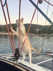 Filo - my sailing 'fur child' from Greece.