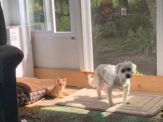 Bailey, our elder dog, and Noah.