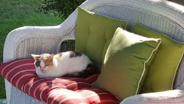 Sarah on the couch on our front porch, a spot she loves!