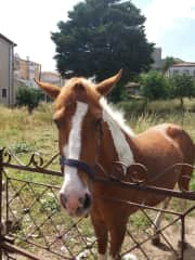 Horse friend  enjoying the Sun in northern Portugal