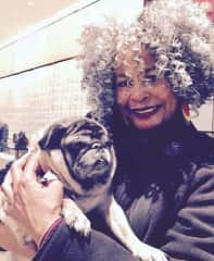 Parker the Pug says you will love Ms. Savannah  for your house and pet sitter! Chicago, IL USA