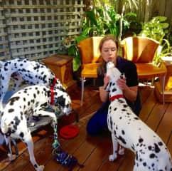 Kylie on a veterinary house call for three dalmatians, Sydney, NSW.