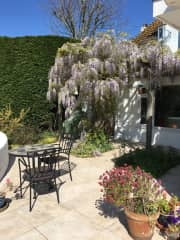 The wisteria looking beautiful in the Summer!