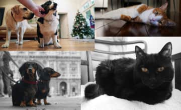George and Cleo from Mosman at Christmas; Lester stretching in Elizabeth Bay; Nina, Pepe and Rudolph in Rome.