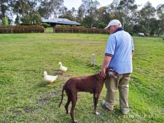 Ollie with the farm ducks.