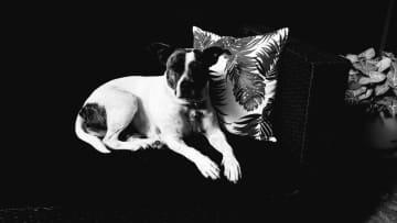 Missy - My second dog sit
