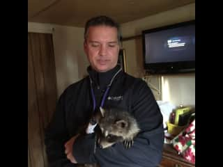 Paraplegic raccoon raised since birth by a rural patient.