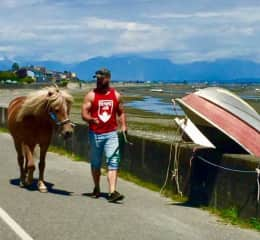 We do it all! Horse walking - 2017 POINT ROBERTS, WASHINGTON / USA