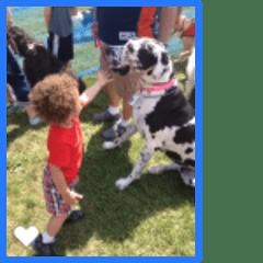 Xavier meets a big doggie