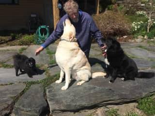 In Vermont Housesitting. Being the Dog Whisperer