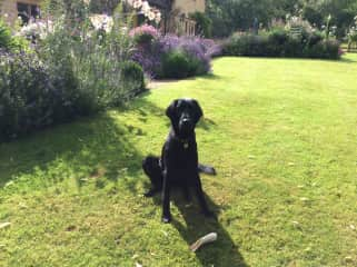Lupin, a very well behaved, smart dog (Chipping Campden)