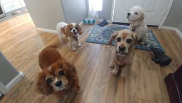 I cared for this pack of four sweet dogs in June 2021.   They are waiting for me to give them the treat in exchange for their photo!