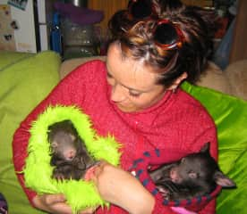 Taking care of orphaned baby wombats