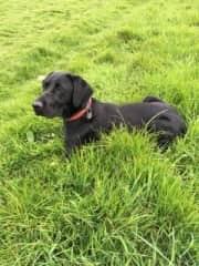Alfie at 12 months