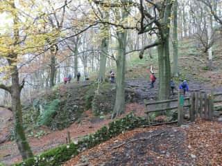 Local woodland walks