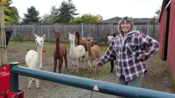 Alpacas and Melanie